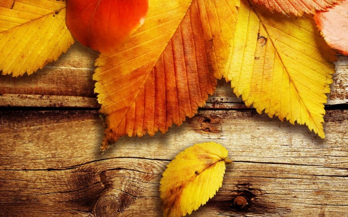 nature-seasons-autumn-yellow-leaves-900x1440